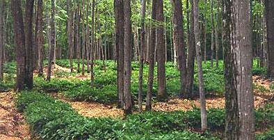 forestfarming2