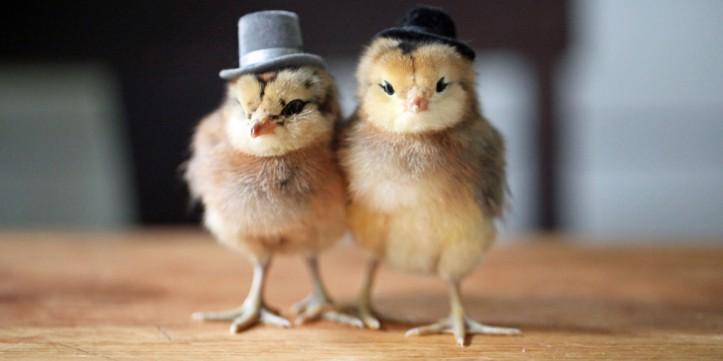 o-baby-birds-hats-facebook
